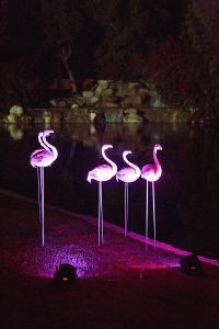 Vision_Events_Flamingo_Wedding